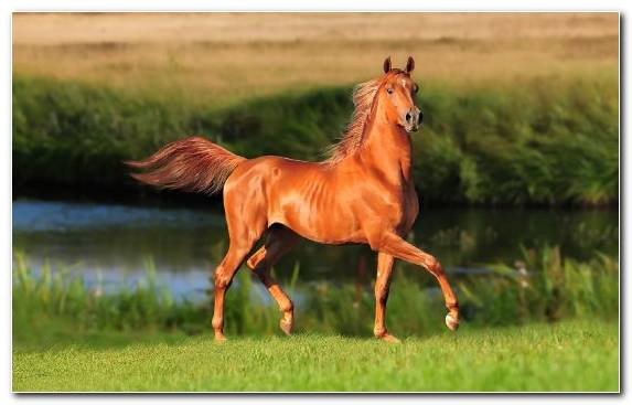 Image Illustration Mane Grazing Mustang Horse Pony