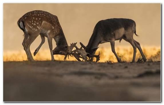 Image Impala Terrestrial Animal Herd Reindeer Wildlife