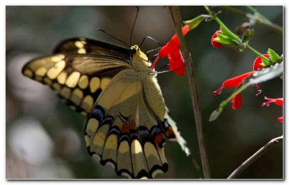 Image Insect Plants Pollinator Flora Nectar