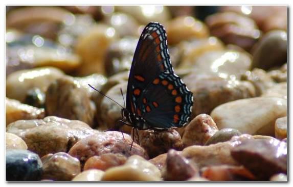 Image Insect Arthropod Invertebrate Pollinator Butterfly