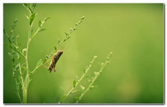 Image Insect Beauty Pest Wildlife Invertebrates