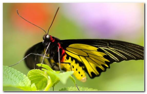 Image insect butterfly gardening invertebrate nectar moth