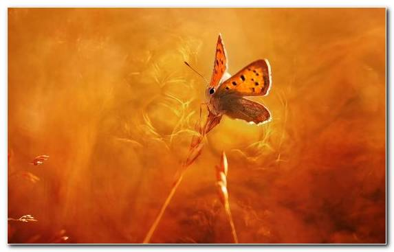 Image Insect Canvas Creative Arts Art Museum Invertebrate