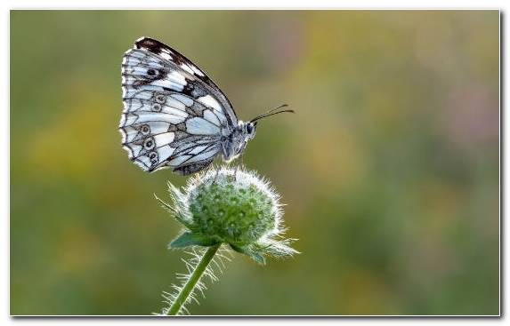 Image Insect Flower Macro Butterfly Pieridae