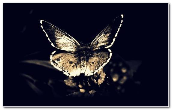Image Insect Goth Subculture Invertebrate Moth Moths And Butterflies