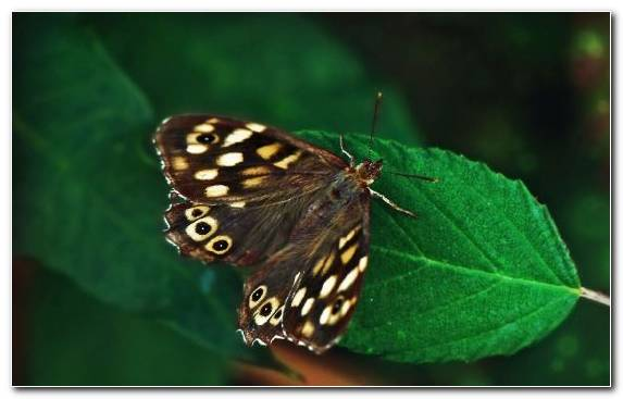 Image Insect Invertebrate Lycaenid Pieridae Pollinator