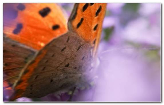 Image Insect Macro Close Up Butterfly Invertebrate