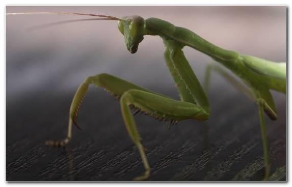 Image Insect Macro Photography Arthropod Wildlife Mantis