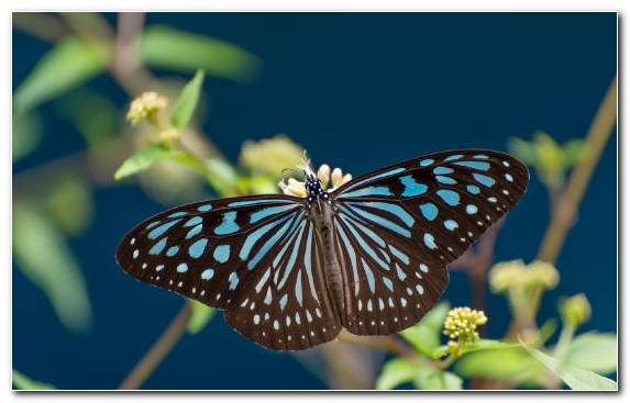 Image Insect Monarch Butterfly Music Moths And Butterflies Pollinator