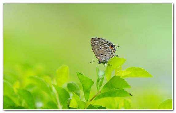 Image Insect Moths And Butterflies Invertebrate Butterfly Pollinator