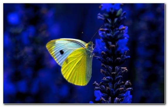 Image insect moths and butterflies nectar brush footed butterfly lycaenid