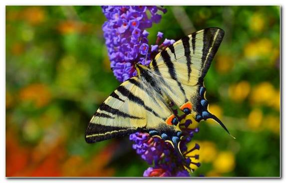 Image Insect Nectar Moths And Butterflies Butterfly Pollinator