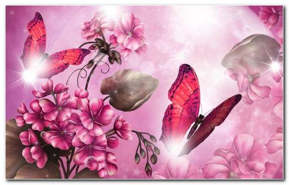 Image Insect Pink Diamond Blossom Petal