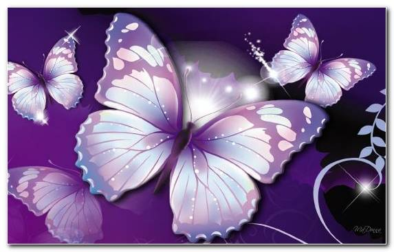 Image Insect Pink Lavender Flower Invertebrate