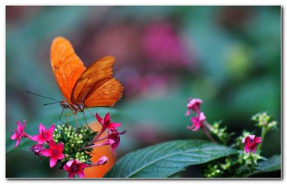 Image Insect Pollinator Brush Footed Butterfly Nectar Flora