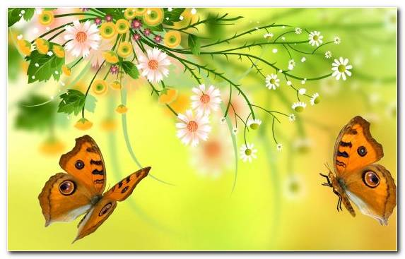 Image Insect Pollinator Design Invertebrate Butterfly