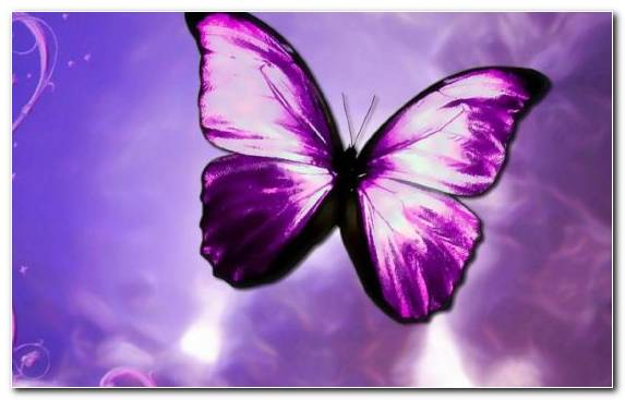 Image Insect Pollinator New York City Whatsapp Violet