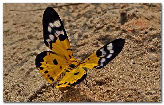Image Insect Wildlife Butterfly Moth Spring