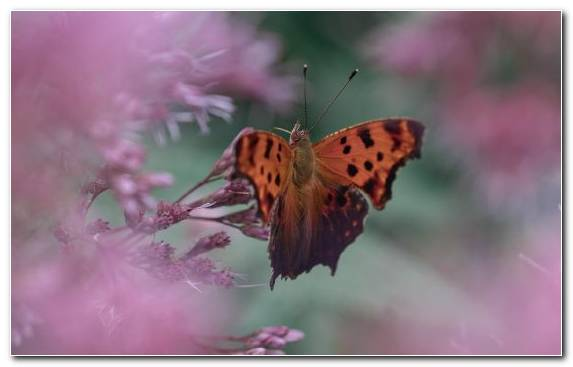 Image Invertebrate Apple Moths And Butterflies Lycaenid Brush Footed Butterfly