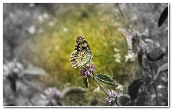Image Invertebrate Brush Footed Butterfly Flora Monarch Butterfly Insect