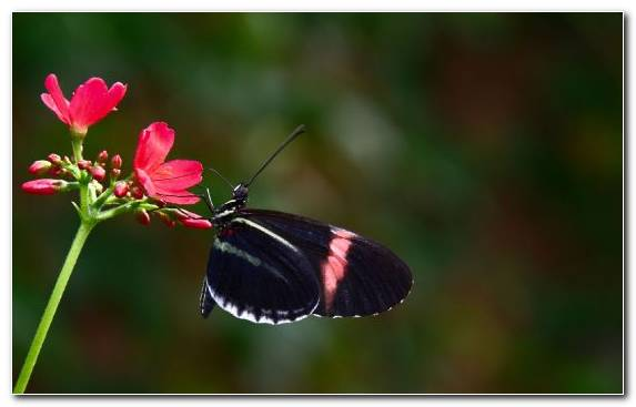 Image Invertebrate Brush Footed Butterfly Pollinator Nectar Moths And Butterflies