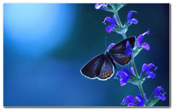 Image Invertebrate Clip Art Lycaenid Moths And Butterflies Blue