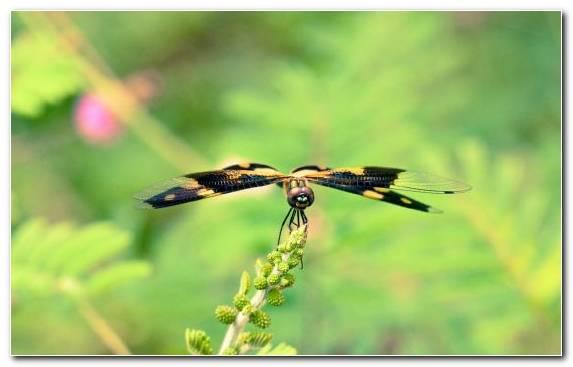 Image Invertebrate Damselfly Pterygota Ecosystem Wildlife
