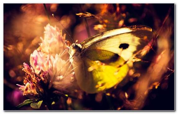 Image Invertebrate Moths And Butterflies Nature Pollinator Yellow