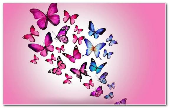 Image Invertebrate Pink Petal Insect Moths And Butterflies