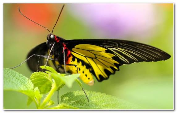 Image Invertebrate Pollinator Butterfly Close Up Insect
