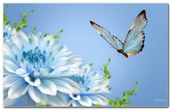 Image invertebrate sky blue butterfly insect