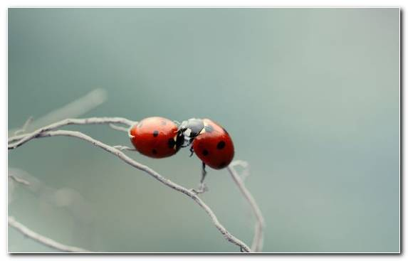 Image Invertebrates Macro Arthropod Macro Photography Insect