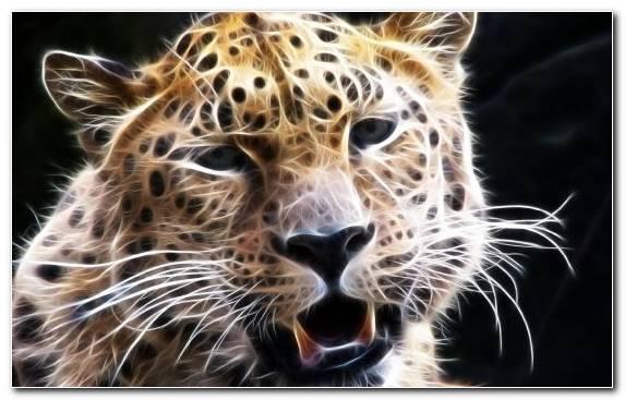 Image Jaguar Terrestrial Animal Cheetah Mammal Leopard