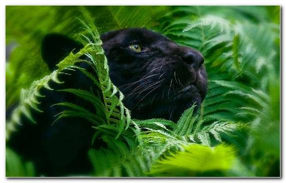 Image Jungle Terrestrial Animal Green Leaves Wildlife