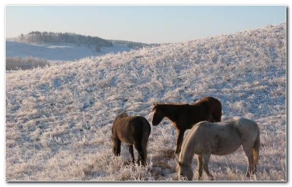 Image Kazakhstan Animal Snow Fauna Kazakh Steppe