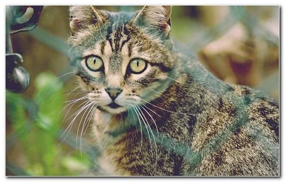 Image Kitten Animal Mammal Dragon Li Small To Medium Sized Cats