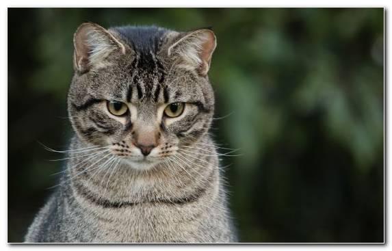 Image Kitten Cat Small To Medium Sized Cats Wildlife Moustache