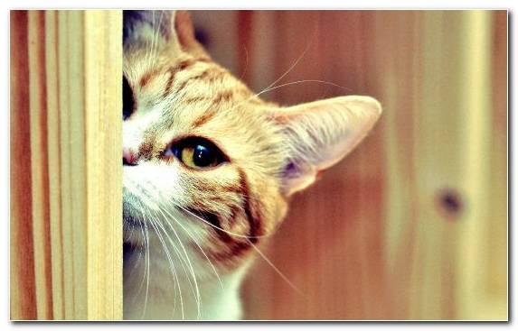 Image Kitten Cuteness Fauna Nose Snout