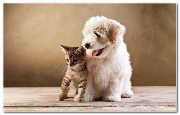 Image Kitten Dog Veterinarian Pet Sitting Dog Breed Group
