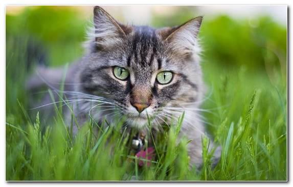 Image Kitten Fauna Cuteness Mammal Green