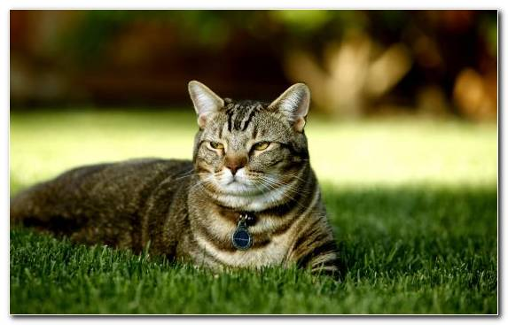Image Kitten Fauna Photographic Filter Green Tabby Cat