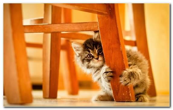 Image Kitten Felidae Vertebrate Meow Cuteness