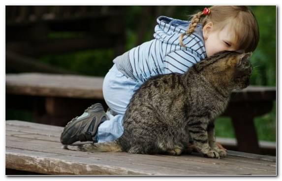 Image Kitten Fur Snout Infant Child