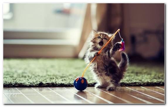 Image Kitten Vertebrate Play