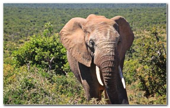 Image Kruger National Park Animal Wildlife African Bush Elephant Terrestrial Animal