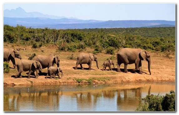 Image Kruger National Park Ecosystem Nature Reserve National Park Elephant