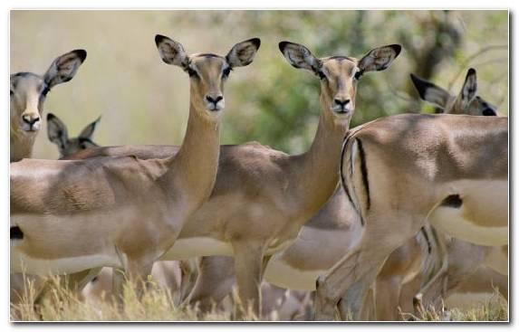 Image Kudu Deer Ecosystem Pronghorn Wildlife