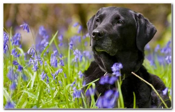 Image Labrador Retriever Plant Golden Retriever Dog Like Mammal Animal