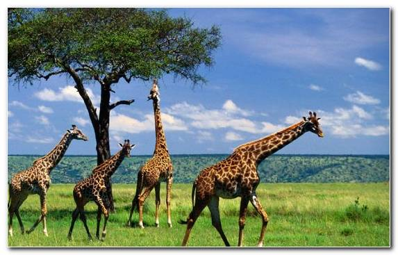 Image Lake Manyara Savanna Tourism Safari Serengeti National Park