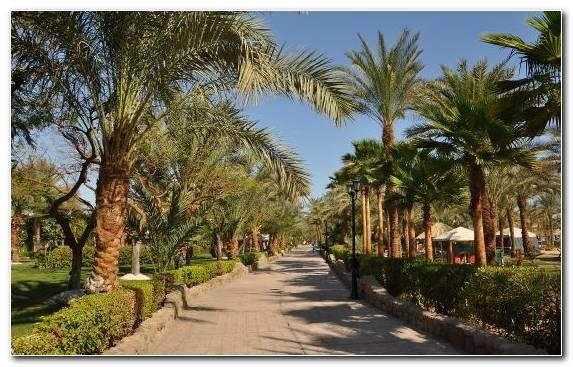 Image Landscape Plant Tree Resort Bay